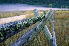 древесина рельса мха загородки заволакивания Стоковая Фотография