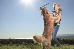Древесина собаки подростковая Стоковое фото RF