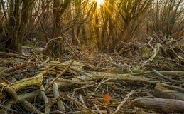 Древесина Солнця Стоковые Фото