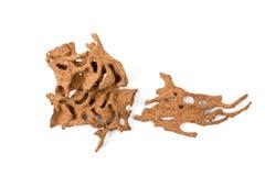 Древесина спада Брайна которое повреждено термитом стоковые изображения