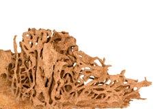 Древесина спада Брайна которое повреждено термитом стоковое изображение rf