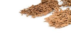 Древесина спада Брайна которое повреждено термитом стоковые фотографии rf