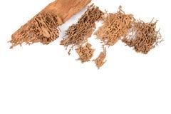 Древесина спада Брайна которое повреждено термитом стоковое изображение