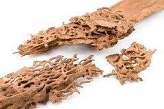 Древесина спада Брайна которое повреждено термитом стоковые фото