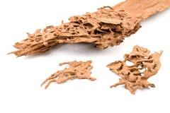 Древесина спада Брайна которое повреждено термитом стоковое фото rf