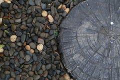 Древесина среди камней стоковое изображение rf