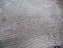 древесина структуры доски Стоковое Изображение