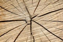 древесина структуры Стоковые Изображения