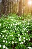 Древесина с цветками весны стоковое изображение