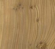 древесина текстуры вяза Стоковая Фотография RF