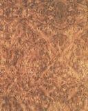 древесина текстуры вяза 33 предпосылок Стоковая Фотография RF