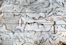 Древесина текстуры в форме кривых Стоковое Изображение