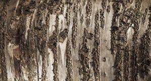 древесина текстуры зерна старая богатая Стоковые Изображения