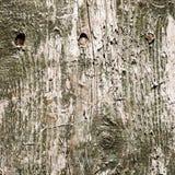 древесина текстуры предпосылки зеленая огорченная текстура взгляда grunge старая деревянная Стоковые Изображения