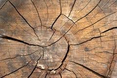 древесина текстуры предпосылки Стоковая Фотография RF