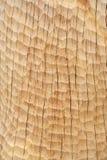 древесина текстуры Стоковая Фотография RF