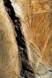 древесина топлива Стоковая Фотография