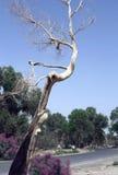 Древесина тополя около дороги стоковые изображения rf
