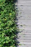 древесина травы крышки моста Стоковое Изображение