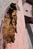Древесина тухлая в старом здании стоковые изображения