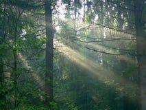 Древесина утра Стоковая Фотография