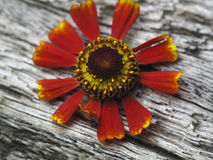 древесина цветка стенда уникально Стоковая Фотография