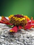 древесина цветка стенда уникально Стоковое фото RF
