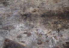 Древесина для предпосылок Стоковые Фотографии RF
