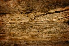 древесина Стоковое фото RF