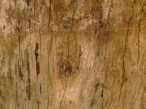 древесина иллюстрация вектора