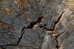 древесина 5 текстур Стоковое Фото