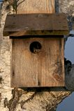 древесина birdhouse Стоковое фото RF