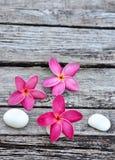 древесина frangipani тропическая выдержанная Стоковое Фото