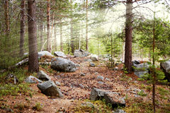 древесина marge Стоковое фото RF