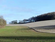 Древесина Scrubbs, Sarratt, Хартфордшир стоковое фото