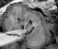 древесина sepia стороны Стоковое Фото