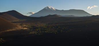 Древесина Tolbachik Ostry и Plosky мертвая - последствие катастрофического отпуска золы во время извержения вулкана внутри стоковое фото