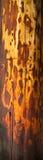 древесина utlity раздела полюса широкая Стоковое Изображение