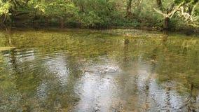 Древесины Англия деревни Chieveley Стоковые Изображения