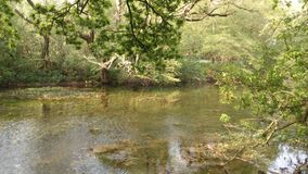 Древесины Англия деревни Chieveley Стоковое Фото