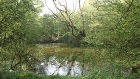 Древесины Англия деревни Chieveley Стоковое Изображение