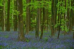 Древесины весны Стоковое Изображение