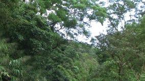 Древесины встряхивания сток-видео