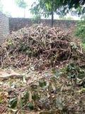 Древесины вырезывания мушмулы Стоковое Фото