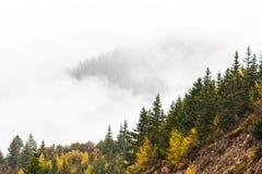 Древесины в гористой местности, Тибете, Китае стоковое фото