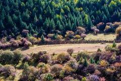 Древесины в гористой местности, Тибете, Китае стоковые изображения
