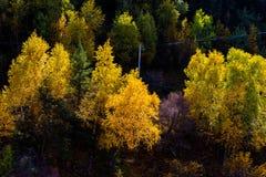 Древесины в гористой местности, Тибете, Китае стоковая фотография rf