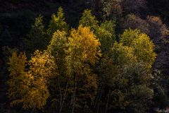 Древесины в гористой местности, Тибете, Китае стоковое фото rf