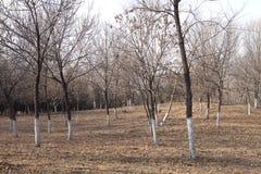 Древесины в зиме Стоковая Фотография