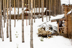 Древесины в зиме Стоковые Изображения